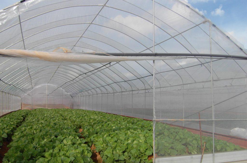从客家菜农到专业化农场:以国华科艺农场为例